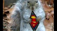 Welcome to Squirrel Country! by Main squirrel_country channel