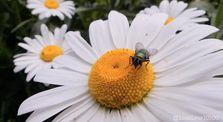 Sleepy Bees ♫ by Blued_L