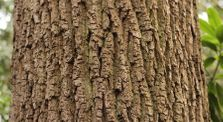 "Art Project ""Never Just a Tree"" - Forests: Video Essay #2 by Shane Finan by Kielderhead Wildwood Project"