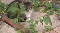 like a cat.mpg by Main vfrmedia channel